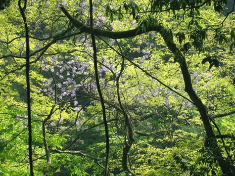 若葉の菊池渓谷_c0107829_22384877.jpg