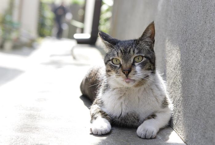 野良猫な日_d0101050_2319566.jpg