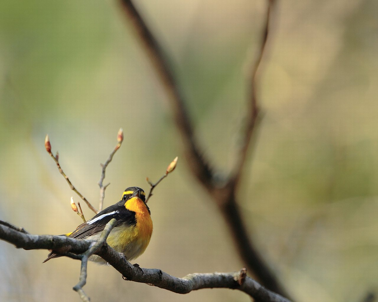 夏鳥普通種も撮っています。_f0105570_224859100.jpg