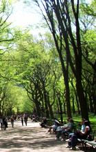 セントラルパークの並木道 ザ・モール(初夏編)_b0007805_10585430.jpg