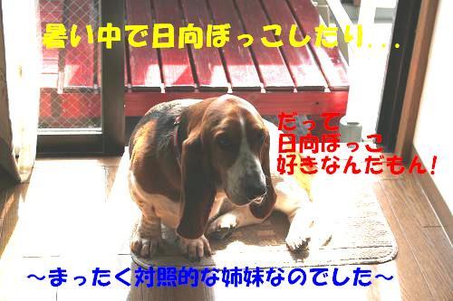 f0121712_1721374.jpg