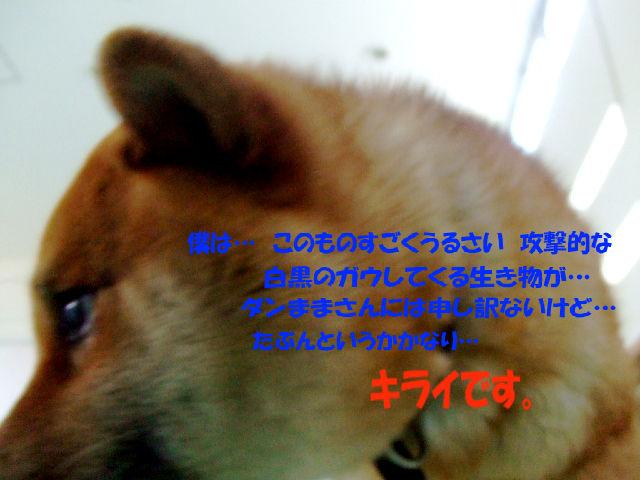 f0059334_97730.jpg