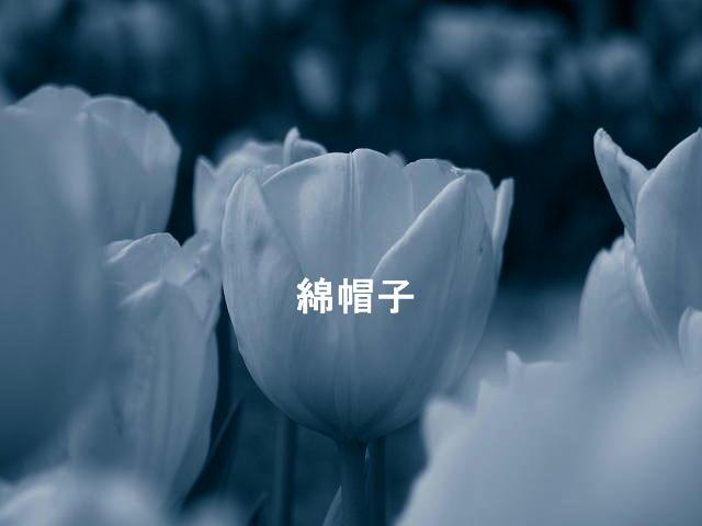 f0099535_18411027.jpg