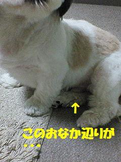 f0067245_21261677.jpg