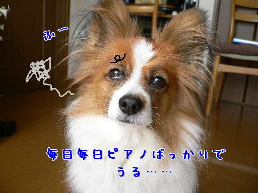 d0013149_9122786.jpg