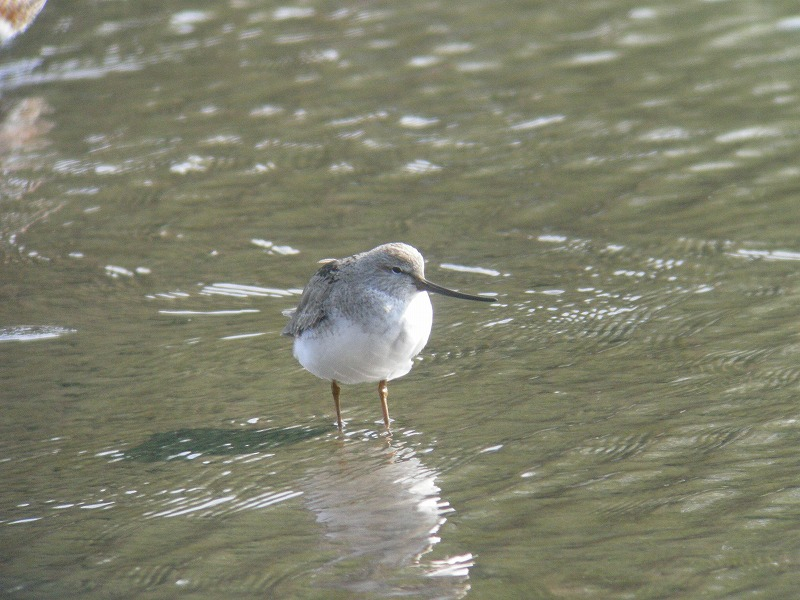 ★サンショウクイがいたそうです 先週末の鳥類園(2007.5.3~5.6)_e0046474_12195310.jpg
