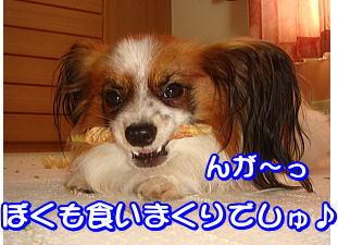f0011845_0351219.jpg