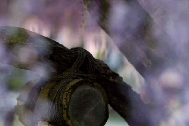 高圓寺の藤棚・3_f0018464_2046152.jpg