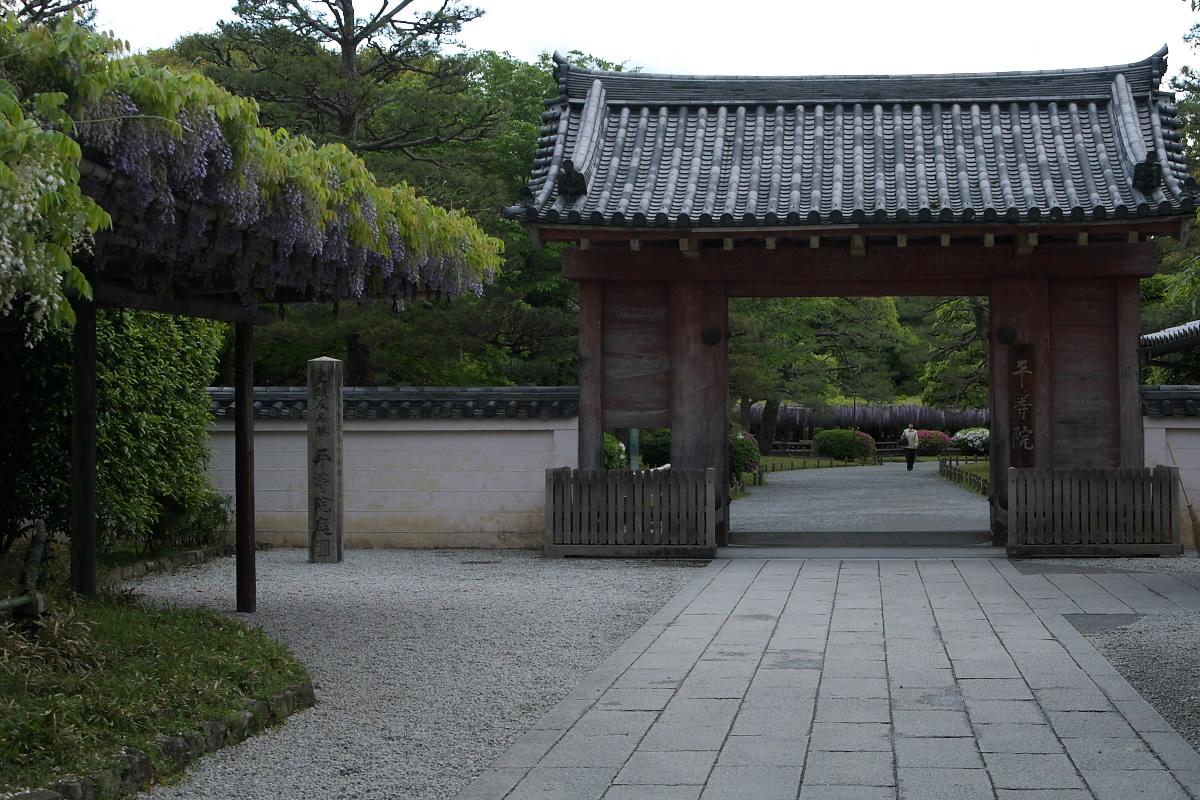 京都 宇治平等院 <藤棚> 4_f0021869_11323053.jpg