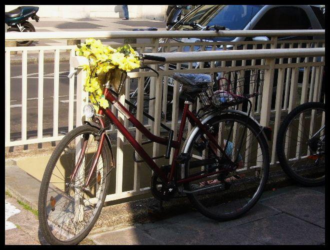 ■街角の自転車(パリ)_a0008105_623268.jpg