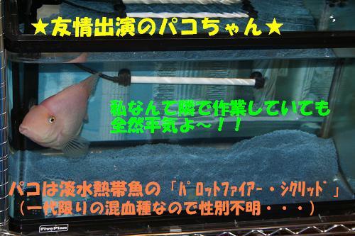 f0121712_1604450.jpg
