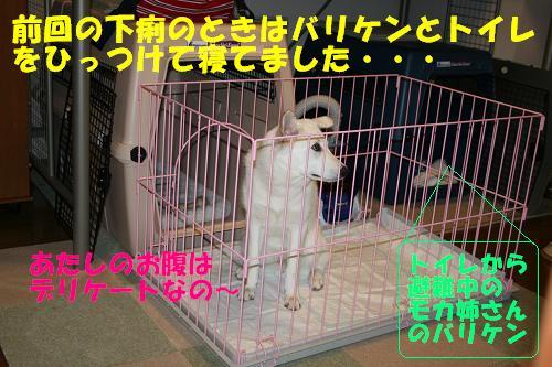 f0121712_1607100.jpg