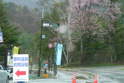 ビーナスライン「プール平」の桜が見頃です_d0102327_12493327.jpg
