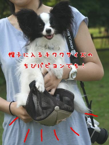 d0013149_063787.jpg