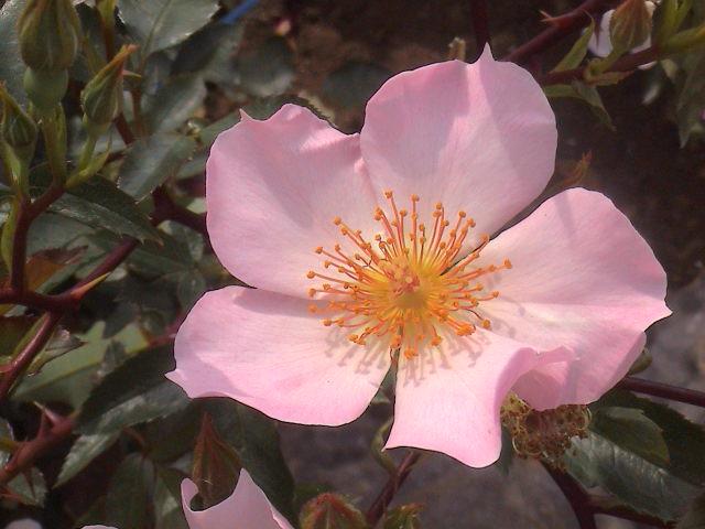 公園のバラ。_e0060555_187197.jpg