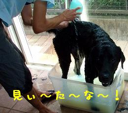 b0003270_16144957.jpg