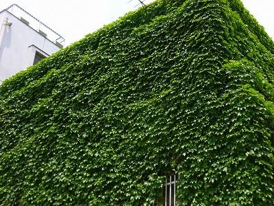 緑の布団_e0114895_1304218.jpg