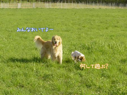 f0064906_19485940.jpg