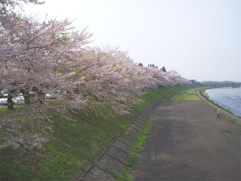 角館 桜_f0107517_13225295.jpg