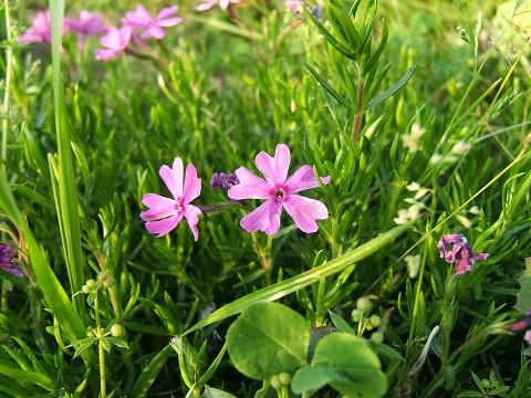 花とりどり_e0089232_091149.jpg