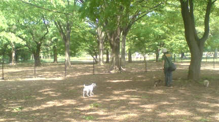 代々木公園のドッグランへ_c0099133_164465.jpg