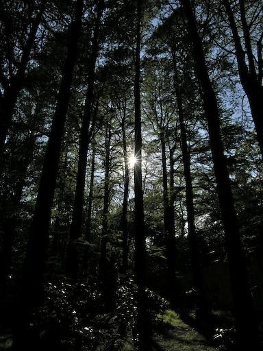 林試の森 1_d0123156_22421846.jpg