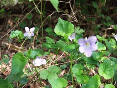 金時山の花 Vol.17_e0024094_23403574.jpg