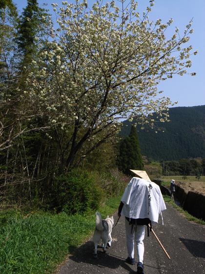4月12日 春遍路第2弾 ダムをめざせ!_c0049299_11474877.jpg