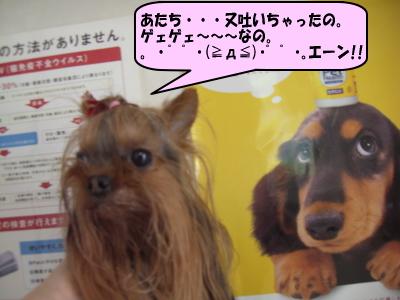 f0040805_1439451.jpg