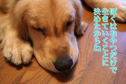 f0134923_16444870.jpg