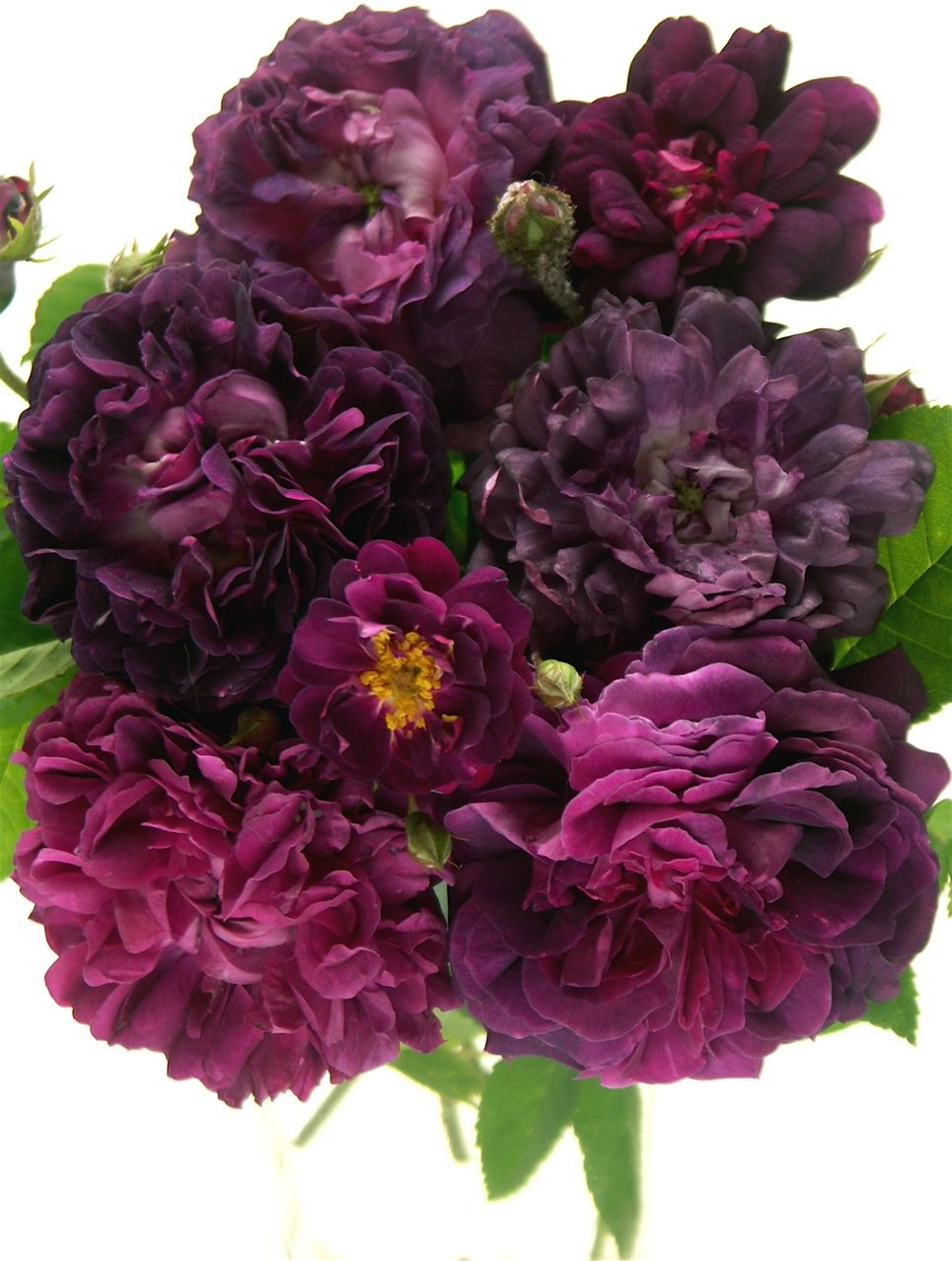 Forbidden Color……紫色の誘惑。_e0044929_19493225.jpg