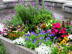 水辺の周りに植えられている色とりどりの花々。花壇が設えてありいつも綺麗な花が咲いています。季節ごとに植え替えをしているのです。