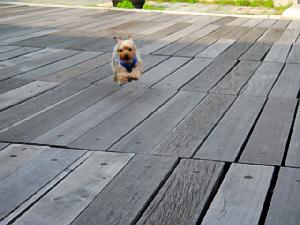 物すごい勢いで走り、板張りの上を飛んでいるように見える一枚。両手を前に出し、完全に空中に浮遊状態のラッキーです。