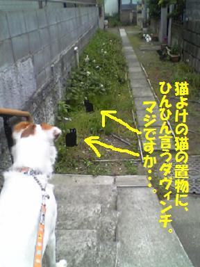 b0086939_2014294.jpg