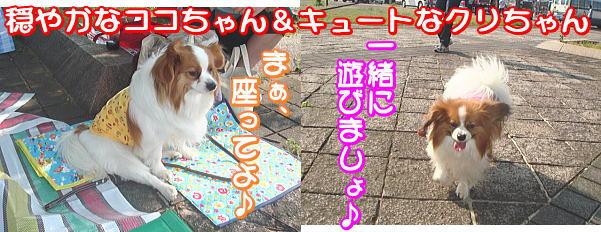 f0011845_0224542.jpg
