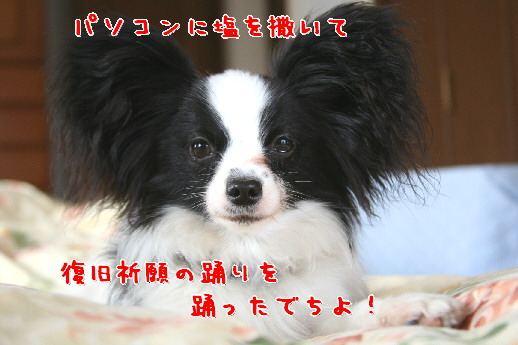 d0013149_03586.jpg