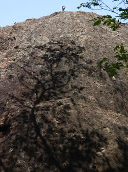 大野山その3(まとめ)_a0032559_2012247.jpg