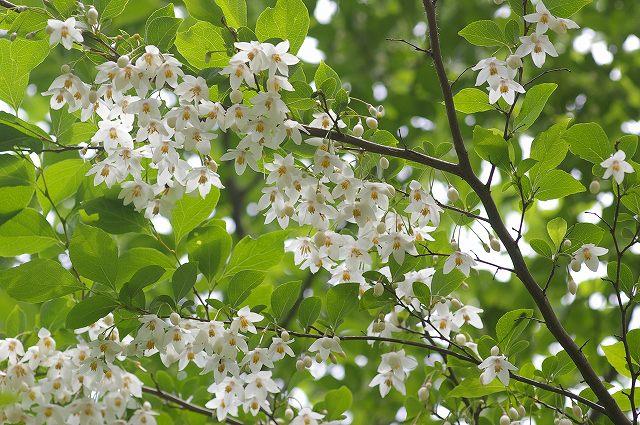 白い花が咲いてた 4  07.5.14_e0070891_20404335.jpg