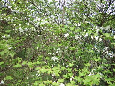 金時山の花 Vol.17_e0024094_083990.jpg