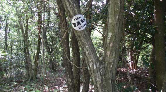 5/15(火) 近くの山に_a0062810_1985836.jpg