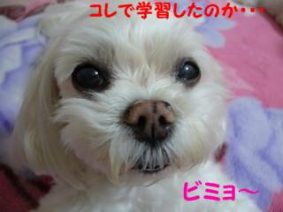 f0005727_1550461.jpg