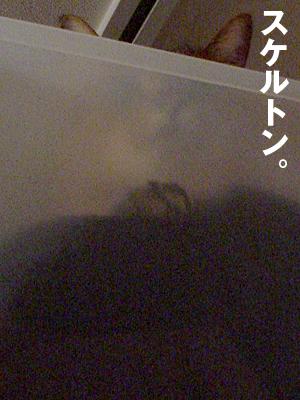 b0080632_1743513.jpg