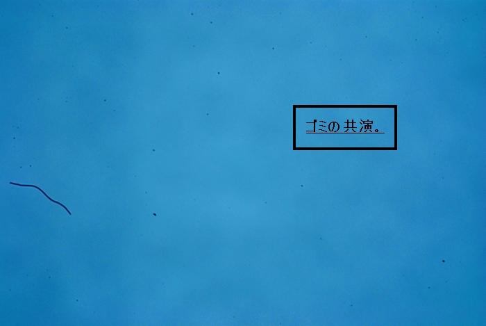 f0138137_2311948.jpg