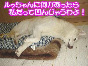 f0011845_15313837.jpg