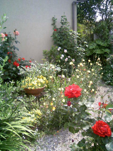 今日の我が家の庭_c0122967_11163349.jpg