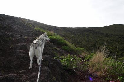 5月14日 ツツジはまだかいな~♪in Mt.Takachiho_c0049299_12212380.jpg
