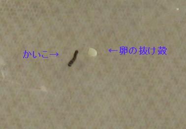 e0080406_17554135.jpg
