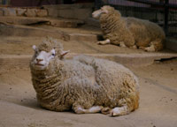 39seriesその8&日本一小さな動物園_f0122107_9423088.jpg