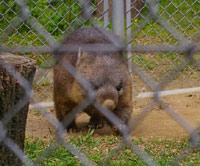 39seriesその8&日本一小さな動物園_f0122107_9474287.jpg
