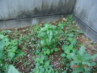 ガーデニング≒野菜作り再考!_b0071543_17482889.jpg